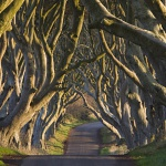 The Dark Hedges - as featured in Game of Thrones