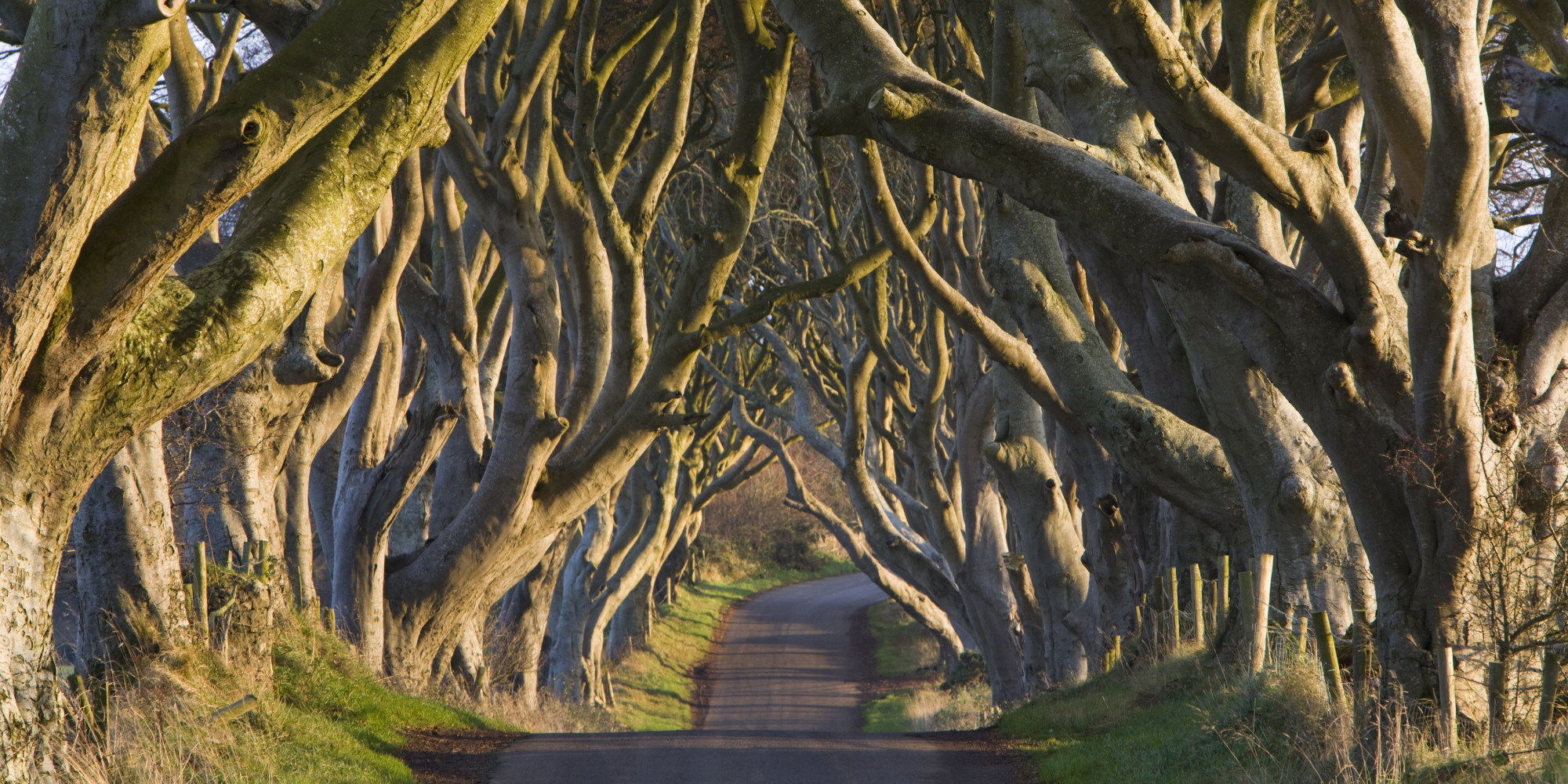 The Dark Hedges - Game of Thrones - J&J Bed and Breakfast